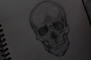 skull by audr3h