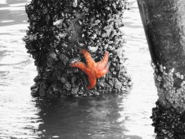 Starfish Color Splash by TheShadowfang