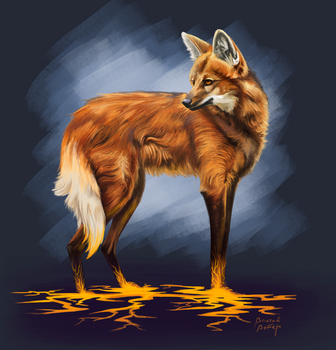 maned wolf by sigma-Volk