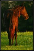 Red Horse by thisisyesterday