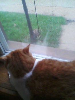 coffee watching a bunny dig in the rain by Cupcakequeenwis