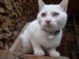 Look at my new collar ^^ by Neroholic