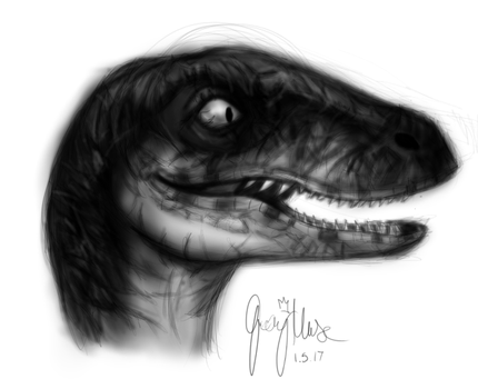 Raptor For Quirky by JashawnMuse