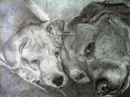 'Father and Son' Golden Labradors - 2013 (Drawing) by Stevegillettart