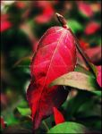 Flush of Red by GrotesqueDarling13