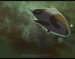 Fictional Porpoise Species by WeisseEdelweiss