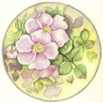009-052 Alberta Wild Rose by sweetmarly