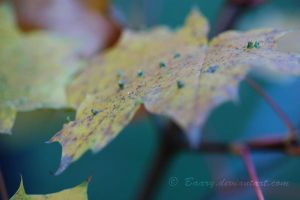 The Yellow Leaf 2 by Baary
