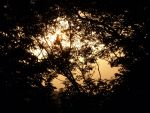 Sunset Through Branches by electropeppers