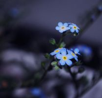 Love,forget-me-not by propan3