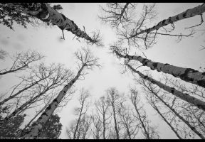 Beneath the Birches by FramedByNature
