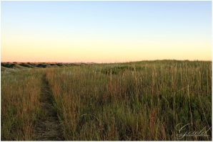 High Field Trail by ThisWomanWanders