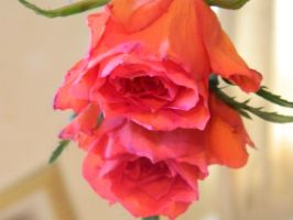Beautiful Rose's by BrightStar2