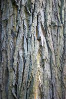bark of a tree by almonsor-stock