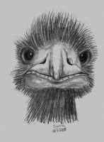 Emu drawing by grugster