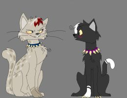 If Ashfur was in BloodClan by crystal-pony123