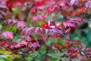 Red leaves by mizuuumi