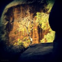 Sandstone Tree. by lostknightkg