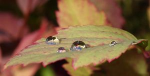 Water Drops by SkyStockProvider