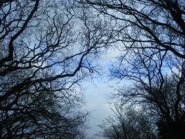 Winter Trees and Branches by LadyxBoleyn