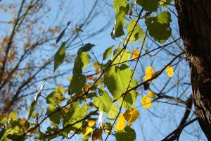 fall leaves 2 by beth4328
