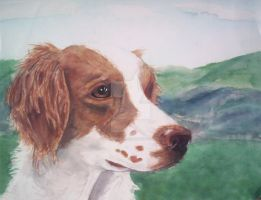 Brittany Spaniel by Ms-Anthropic