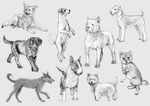Dog studies by DreamsOfSilence