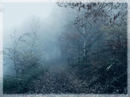 Fairy Wood VII by Weissglut