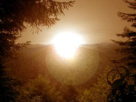 Redwood Sunset by Parnelli-11