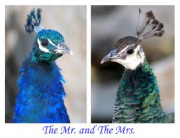 The Mr. and The Mrs. by I-Heart-Photos
