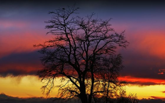 Tree of Life by IvanAndreevich