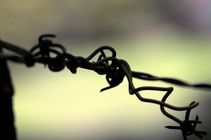 Barbed Wire by danielgregoire