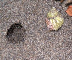 A hermit crab and a hole by Vivienne-Mercier