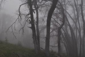 Enveloped Through Mist and Boughs I. by swampliquor