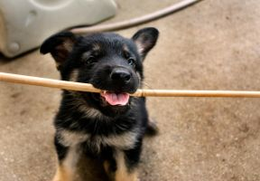 I haz a stick, I give you stick by ShineeDragon