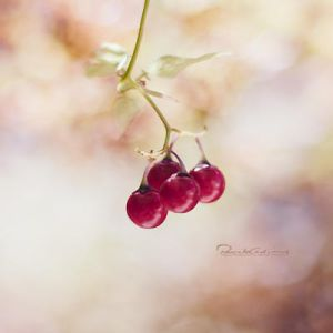 Autumn berries by fruitpunch1