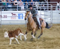STOCK 2013 Rodeo-161 by fillyrox