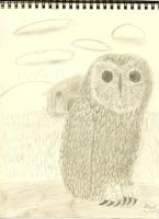 Barn Owl Watching Over the Farm by Grant2Y