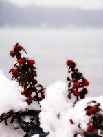 Colours in the Snow by happybg