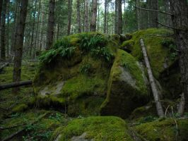 Malahat Forest by MelvWolfe