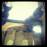Cats.... by Javierx1991