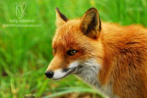Red Fox by Shadow-and-Flame-86