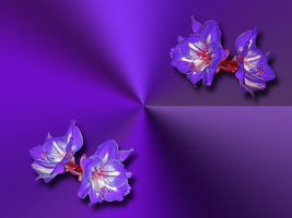 Purple Bloom Wallpaper by WDWParksGal-Stock