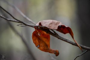 A Muttontown Autumn by WickedOwl514