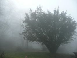 Foggy Tree by Track-Maidens