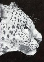 Ballpoint Leo by Cindy-R