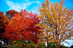 Colorful trees by Gallynette