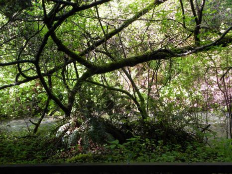 Deep Forest 1 by Mike-the-Vector