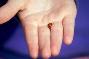 Holding a Ladybug by Danimatie