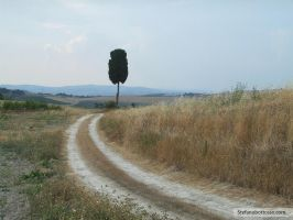 Montalcino - Tuscany - Cypress by cfs3creative